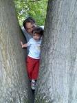 faba szorult gyermek