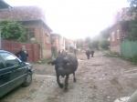 szomszed falu: torockoszentgyorgy
